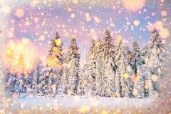 Arbres de paysage d'hiver bloqués par la neige, fond de bokeh avec le snowflak Photo stock
