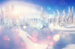 Arbres de paysage d'hiver bloqués par la neige, fond de bokeh avec le snowflak Images stock
