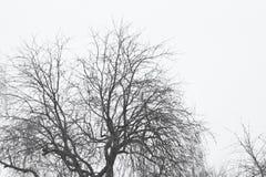 Arbres de paysage dans le jour d'hiver photos libres de droits