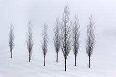 Arbres de peuplier dans l'environnement mou et tranquille dans l'horaire d'hiver Photo libre de droits