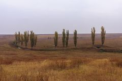 Arbres de peuplier grands et minces se tournant vers la couleur jaune d'or d'automne photo stock