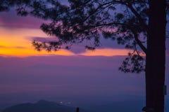 Arbres de pin au lever de soleil Image libre de droits