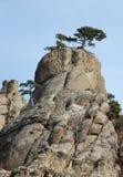 Arbres de pin aux roches de Demirji, vallée d'ordinateur de secours Image stock