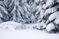 Arbres de pin couverts de neige. Photos stock