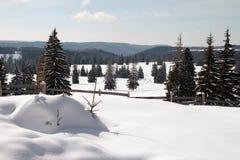Arbres de pin dans la neige Photographie stock libre de droits
