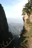 Arbres de pin sur la montagne image stock