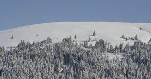 Arbres de pin sur la montagne neigeuse Photographie stock