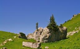 Arbres de pin sur une roche Image libre de droits