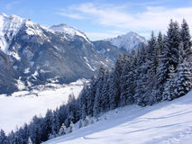 arbres de pistes de montagnes Photo libre de droits