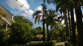 Arbres de Plam dans le jardin Photo libre de droits