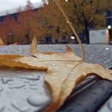 Arbres de pluie de nature de congé d'Autum Images stock