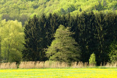 Arbres de printemps Photo libre de droits