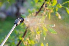 Arbres de pulvérisation avec des pesticides photos stock