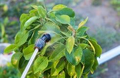 Arbres de pulvérisation avec des pesticides photographie stock