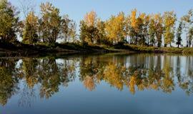 arbres de réflexion Photographie stock
