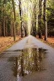 arbres de réflexion Photo stock
