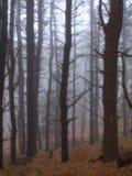 arbres de regain Photo libre de droits