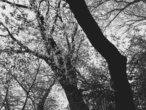 arbres de ressort dans les montagnes de Bieszczady photographie stock libre de droits