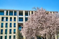 Arbres de ressort et la façade du bâtiment moderne Image stock
