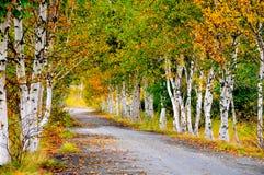 arbres de route d'automne de pays Photos libres de droits
