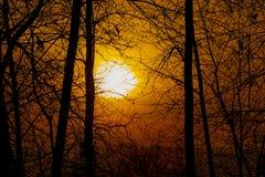Arbres de silhouette d'orange chaud photos stock