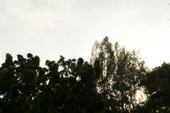 Arbres de Sillhouette Photos stock
