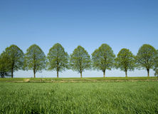 Arbres de source Photographie stock