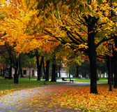arbres de stationnement Photo stock