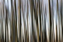 Arbres de tache floue de mouvement Images stock
