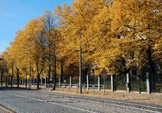 Arbres de tilleul en automne Photographie stock libre de droits