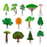 Arbres de vecteur L'arbre forestier a placé avec les titres, le bouleau et le chêne, le pin et le baobab, l'acacia et le vecteur  Photos libres de droits