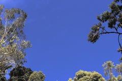 Arbres de vert de ciel bleu Image stock