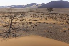 Arbres de Viewof près de la dune 45 dans le désert de Namib, Sossusvlei, N Photos stock