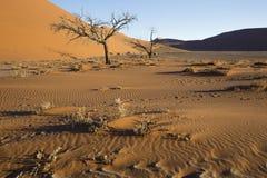 Arbres de Viewof près de la dune 45 dans le désert de Namib, Sossusvlei, N Images stock