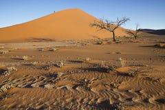 Arbres de Viewof près de la dune 45 dans le désert de Namib, Sossusvlei, N Photo stock