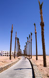 Arbres de voie de désert Image libre de droits