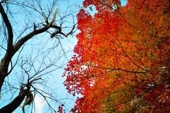 Arbres debout en automne Photo stock