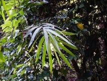 Arbres denses dans la forêt photo libre de droits