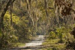 Arbres drapés par mousse chez Harris Neck National Wildlife Refuge, Georg Photos libres de droits