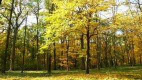 Arbres du soleil de forêt d'automne clips vidéos