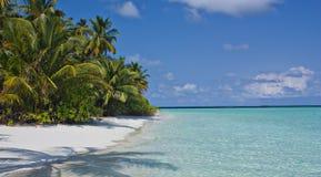 arbres du soleil de paume de plage dessous Images libres de droits