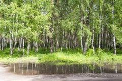 Arbres, eau et buissons près de la route Image stock