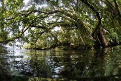 Arbres, eau, et Epiphytes tropicaux en Solomon Islands Images libres de droits