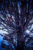 Arbres embranchés en parc, coucher du soleil, hiver Photographie stock libre de droits