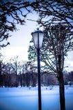 Arbres embranchés en parc, coucher du soleil, hiver Photo stock