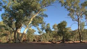 Arbres en Alice Springs, Australie clips vidéos