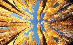 Arbres en automne images stock