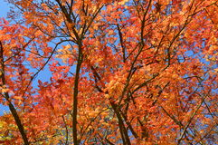 Arbres en automne photos stock