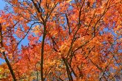 Arbres en automne Photos stock