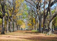 Arbres en automne/automne Photos stock